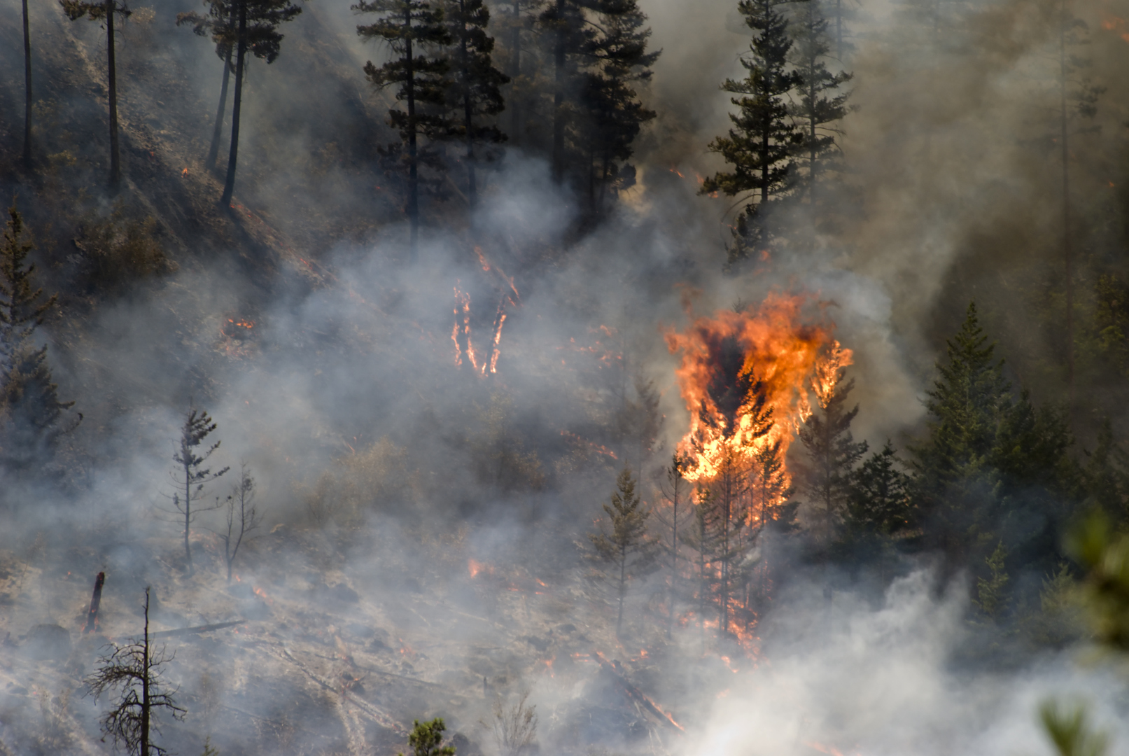 Analysis of Avoided Water Utility Costs from Wildfire Risk Mitigation
